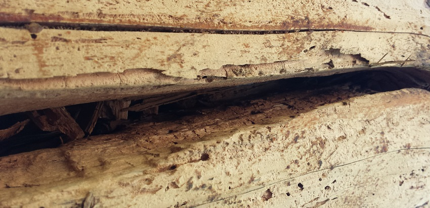 Log Home Pest Damage Repair And Service Termites Wood Worms